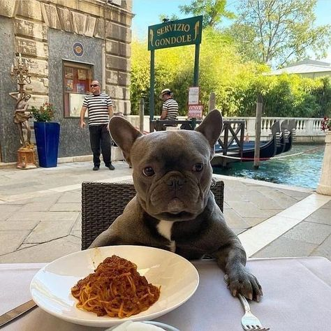 The PAW-fect date! 🍝 @frenchie4oe