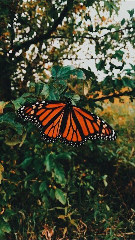 Vsco Goodvibes Vsco Butterfly Wallpaper Iphone Orange Aesthetic Butterfly Wallpaper