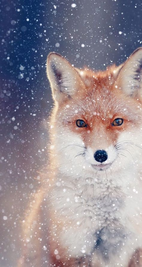 Red Fox Art Wallpapers Phone ~ Click Wallpapers - #art #click #Fox #phone #Red #Wallpapers