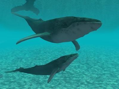 Whales symbolize creation, power of song, awakening inner depths.