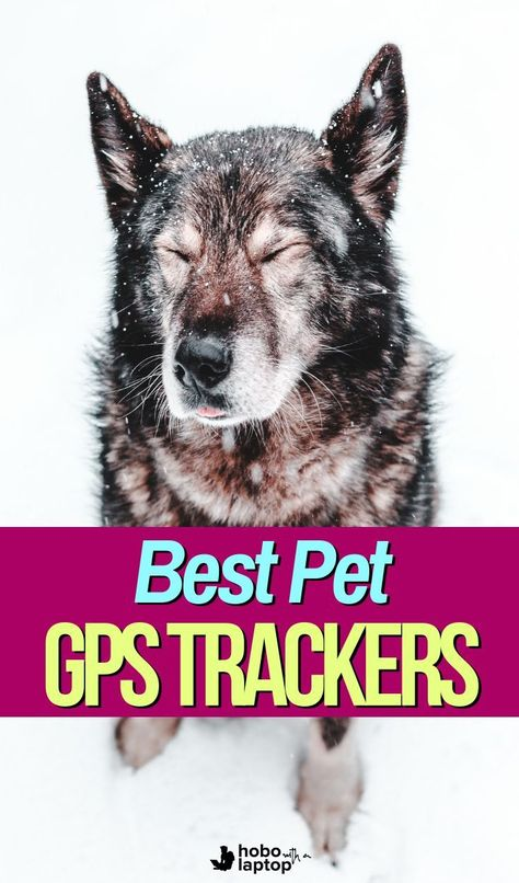 What's the Best Personal GPS Tracker for Kids, Pets, Traveling, or Luggage? | Hobo with a Laptop