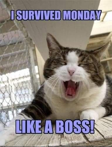 Yay Bring On Tuesday Likeaboss Funny Animals Monday Humor Funny Cat Pictures Thought this was a meme website. funny animals monday humor funny cat