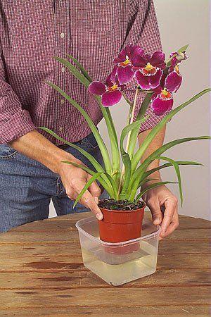 Reussir L Arrosage Des Plantes D Interieur Arrosage Des