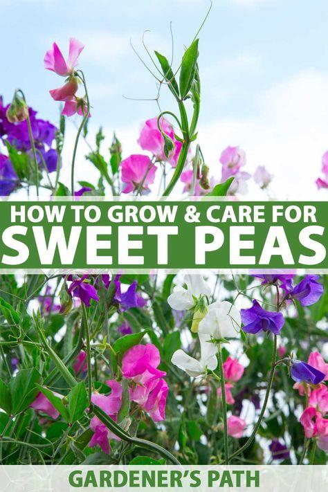 440 California Flower Gardens Ideas In 2021 Planting Flowers Plants
