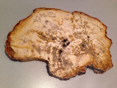Petrified Wood Polished Board