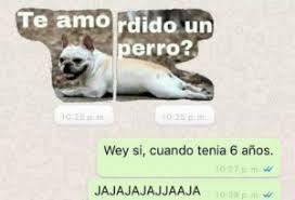 Hola Te Amo Amordido Un Perro Busqueda De Google Perros Memes Divertidos Te Amo