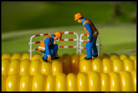 Fixing the Yellow Brick Road | Flickr - Photo Sharing!