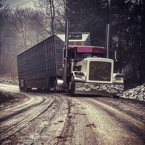 Custom Peterbilt, Peterbilt 389, Peterbilt Trucks, Ford Trucks, Big Rig Trucks, Semi Trucks, Lifted Trucks, Custom Big Rigs, Custom Trucks
