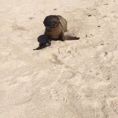 UP CLOSE with a Baby SEALION - #Baby #Close #funny #SEALION