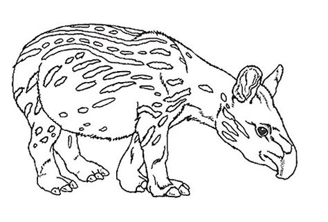 Tapir Coloring Google Search Animal Coloring Pages Tapir Animals