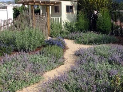 California Native Plant Garden Design Garden Design Ideas