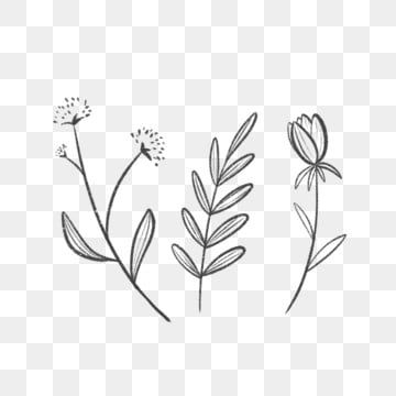 Three Simple Lined Leaves And Flowers Drawing Nature Leaf Png Transparent Clipart Image And Psd File For Free Download Leaf Clipart Flower Clipart How To Draw Hands