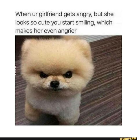 When Ur Girlfriend Gets Angry But She Looks So Cute You Start Smiling Which Makes Her Even Angrier Ifunny Animal Memes Funny Animal Memes Funny Animal Pictures