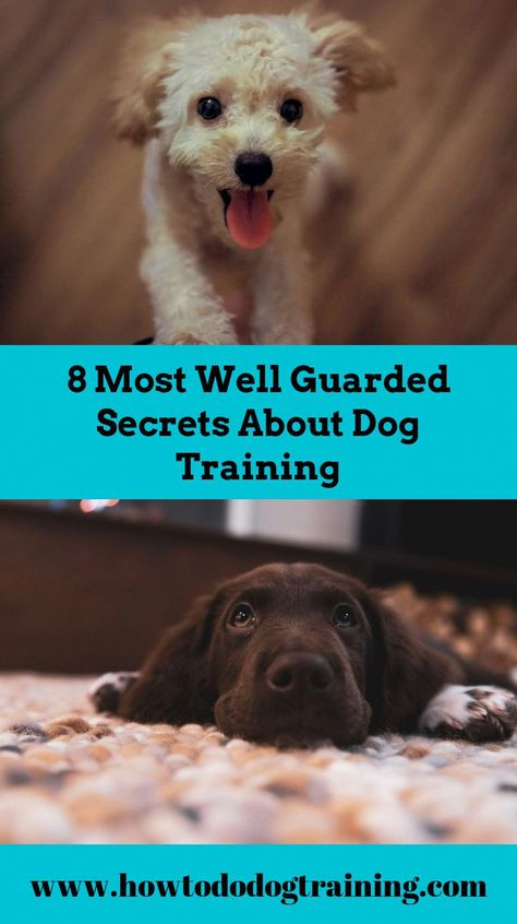 Need Support With Pet Dog Training Look At These Pointers When