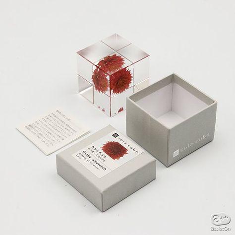 sola cube   AssistOn