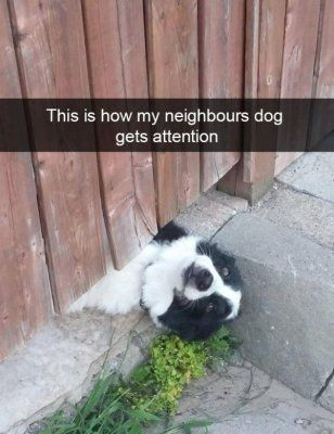 Cutesypooh Dog Snapchats Funny Animals Funny Animal Pictures