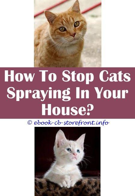 4 Reliable Hacks Cat Spray Talk To