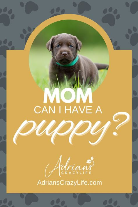 Mom, Can I Have a Puppy? - Adrian's Crazy Life