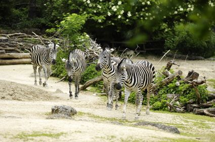 Best Zoos To Visit From All Over The World | World, All ...