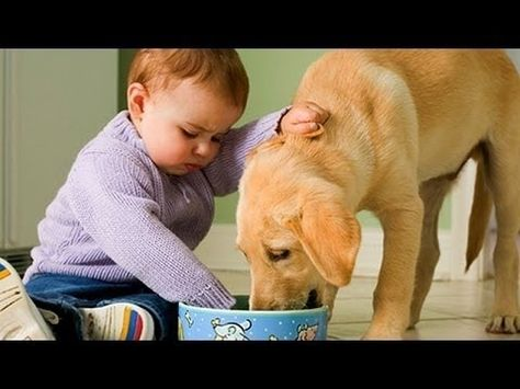 Top Funny Baby Videos Around The World Whatsapp Collection Funny