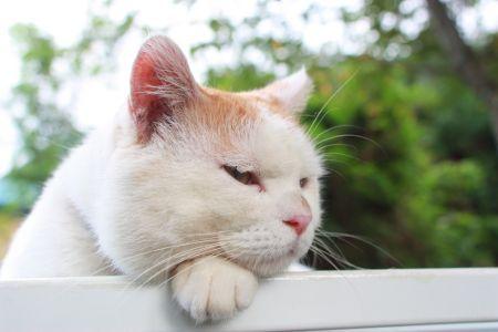 かんがえちゅう かわいい猫 可愛すぎる動物 かご猫