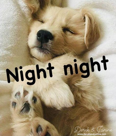 400 Sweet Dreams Good Night Ideas In 2020 Good Night Sweet Dreams Night