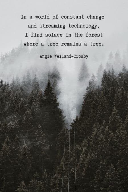 Humanity Quotes Nature Peace Quotes For The Soul Nature Quotes Nature Lover Quotes Peace Quotes