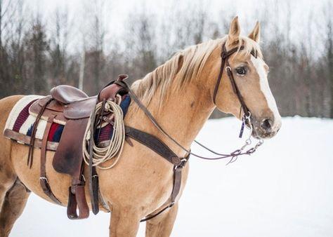 palomino palomino - Art Of Equitation Cute Horses, Horse Love, Horse Girl, All The Pretty Horses, Beautiful Horses, Animals Beautiful, Palomino, Western Riding, Western Tack