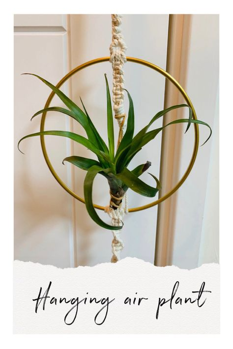 Macrame hanger with hoop to hold an air plant.