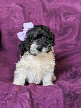 Pin By Azaree S Gigi On Cutest Puppy