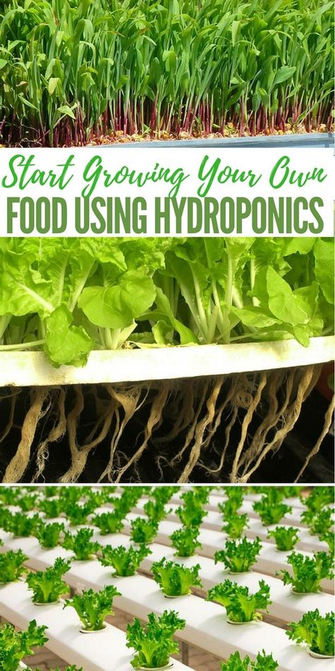 An introduction to hydroponic gardening - Gardening Site