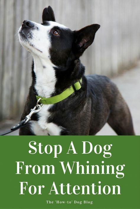 Find Out How To Stop Your Dog From Whining For Attention
