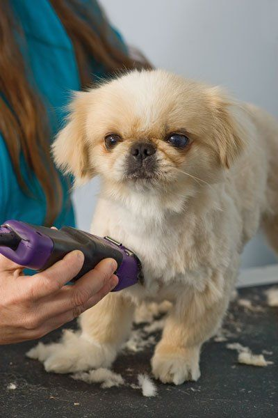 Best Dog Clippers You Can Do This At Home Dog Grooming Dog Clippers Dogs