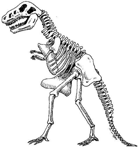 Dinosaur Skeleton Template Dinosaur Skeleton Dinosaur Activities Sharks For Kids