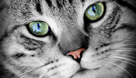 660 Ideas De Gatos Gatos Mascotas Animales