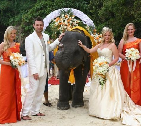 Marrying in Thailand - Elephants optional  ---  welp i know where i'm getting married