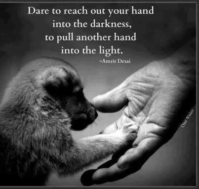 Animal Cruelty Quotes Mesmerizing This Is Just One Of Those Quotes That Lights A Spark Inside You To