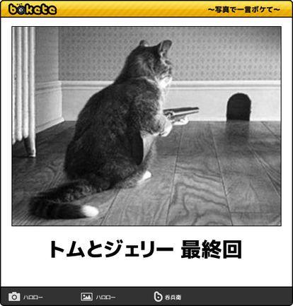猫bokete ボケて 秀逸ボケ Naver まとめ Cats Animals Laugh