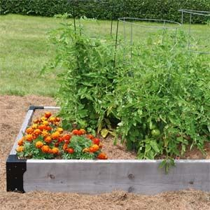 Raised Bed Companion Planting With Tomatoes And Marigolds Companion Gardening Growing Organic Tomatoes Garden Companion Planting