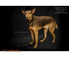 Perros Ya Adoptados España Santa Cruz De Tenerife Tenerife Rony Adoptado Albergue Valle Colino Trend Animals Dogs