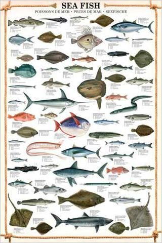 Sea Fish Wall Chart 59 Saltwater Species Poster Eurographics Sea Fish Fish Chart Saltwater Fishing