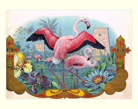 "Flamingo Brand Cigar Label, Tobacco Advertisement, Birds, exotic birds, pink flamingos. antique cigar labels, 8x10"" Cotton Canvas Print"