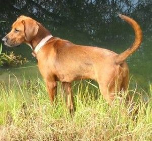 Looks Like My Baby Buddy Puppy Dog Pictures Dog Mixes Hound Dog