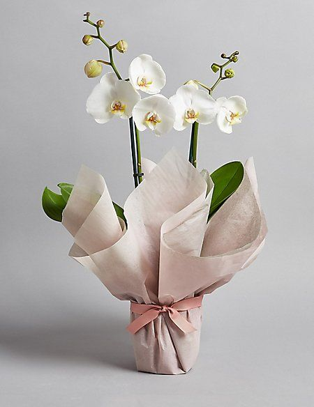 Gift Wrapped Orchid House Plant M S How To Wrap Flowers Orchid Centerpieces Wedding Orchid Flower Arrangements