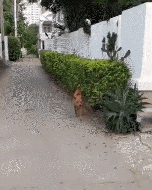 Trending Cute Funny Animals Funny Animals Funny Dogs