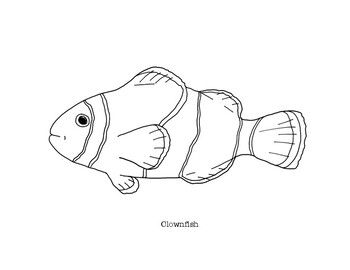 Clownfish Coloring Page Fish Drawings Clown Fish Coloring Pages