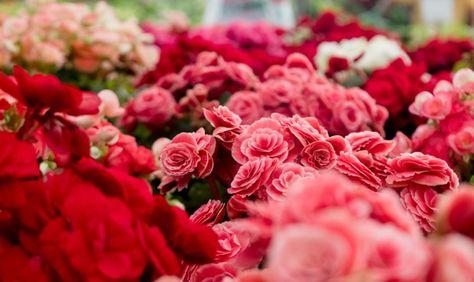 Regalare Fiori.Fiori Da Regalare A San Valentino San Valentino Fiori E Bouquet