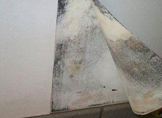 Black Mold Behind Wallpaper Old Wallpaper Molding Wallpaper