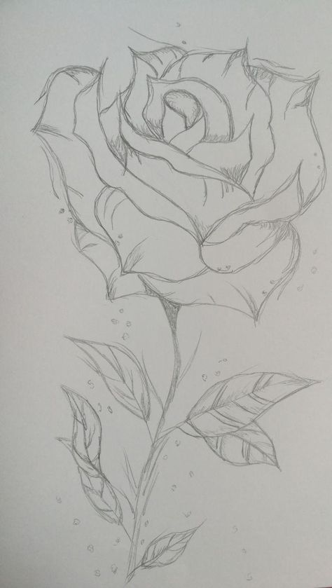 🥀Roses bloom every year Be happy that your still here To see the petals and c... - #pencilart