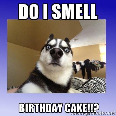 Smell Birthday Cake Meme Funny Birthday Meme Happy Birthday Cat Happy Birthday Funny